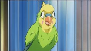 Попугай Инко