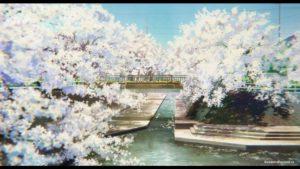 На мосту с сакурой